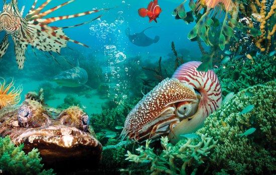 Still from Under the Sea IMAX film