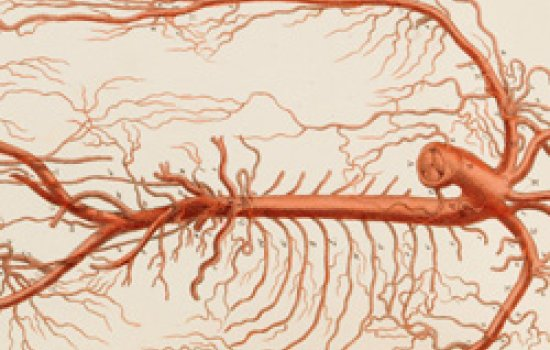 The arteries of the chest and arms