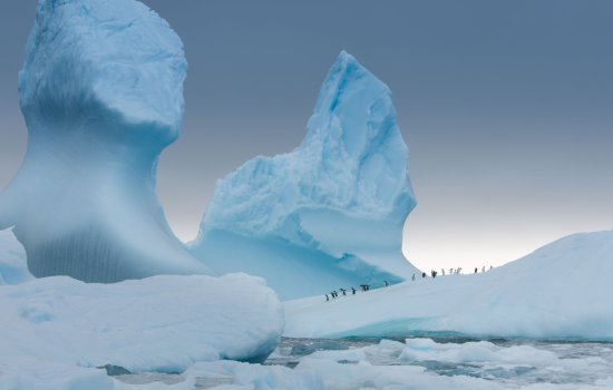 Gentoo penguins heading out to sea to feed in BBC Earth's Antarctica 3D