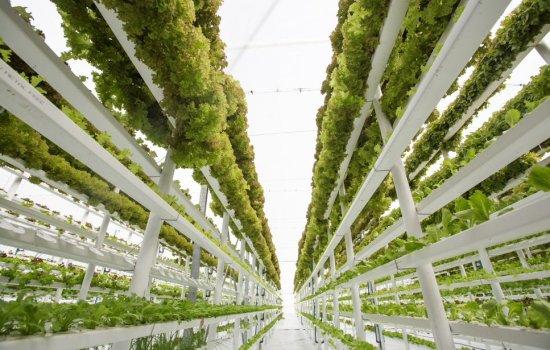 Indoor horticulture