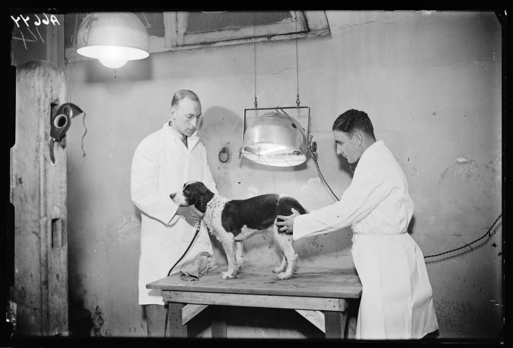 A photograph of a dog having light treatment